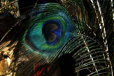 Free Closeup Of Peacock Feather Royalty Free Stock Photography - 85191067