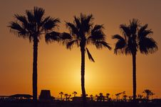 Free Silhouette Palm Trees On Beach Against Sky Stock Photos - 85191313