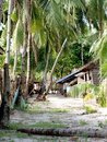 Free Coconut Trees In Philippines Royalty Free Stock Photo - 8521425