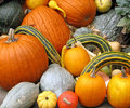 Free Gourds Stock Photo - 8521820
