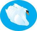 Free White Swan Stock Photos - 8523783