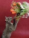 Free Cat Stock Image - 8525301