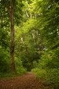 Free Wood Track Stock Photo - 8526840