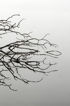 Free Branches Stock Images - 8520254