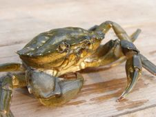Free Sad Crab Stock Images - 8520424