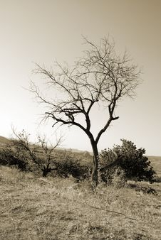 Free Lonely Tree Royalty Free Stock Photos - 8521358