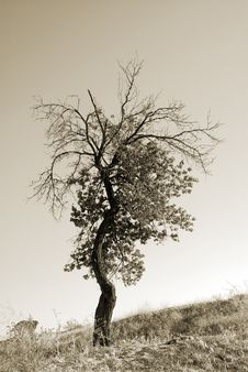 Free Lonely Tree Stock Photography - 8521412