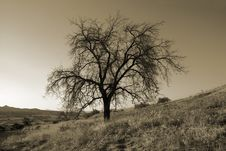 Free Lonely Tree Royalty Free Stock Images - 8521459