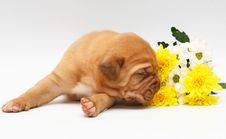 Free Pup With Flowers. Royalty Free Stock Photo - 8521805