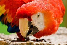 Free Scarlet Macaw Bird Stock Photography - 8522282