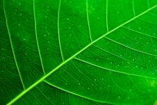 Free Leaf Patterns Royalty Free Stock Photos - 8522318