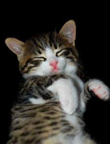 Free Sleepy Cat Stock Photography - 8522452