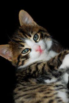 Free Cat Stock Photos - 8522483