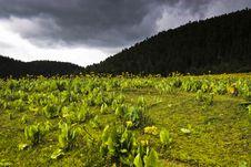 Shangri-la Landscape Stock Image