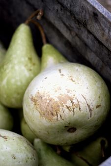 Free Squash Stock Photos - 8523263