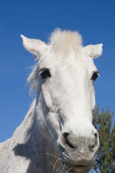 Free Horse Head Against Blue Sky Royalty Free Stock Photography - 8524947