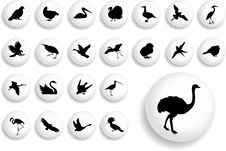 Big Set Buttons - 18_B. Birds Royalty Free Stock Image