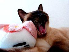 Free Cat, Vertebrate, Carnivore, Felidae Stock Image - 85203481