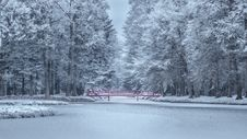 Free Frozen Trees During Winter Royalty Free Stock Photos - 85214698