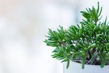 Free Close-up Of Fresh Green Plant Against Tree Stock Images - 85216594