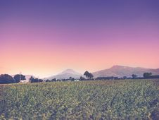 Free Green Fields With Colorful Skies Royalty Free Stock Images - 85216969