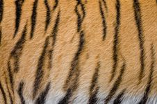 Free Tiger Stripes Royalty Free Stock Photos - 85221018