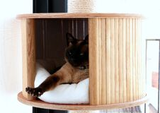 Free King Of The Cat Tree Royalty Free Stock Photography - 85252157