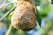 Free Birds Nest Hanging From A Tree Royalty Free Stock Photography - 85260887