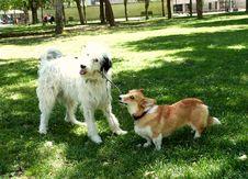 Free Dogpark Friends Stock Image - 85263551