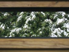 Free Snow On Branches Of Pine Trees Stock Photos - 85281483