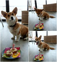 Free Sun S 1st Birthday! Royalty Free Stock Photos - 85284818