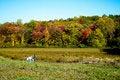 Free Autumn Walk Royalty Free Stock Photo - 8530715