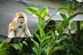 Free Monkey Stock Photo - 8532320
