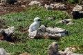 Free Small Baby Bird Near A Nest Royalty Free Stock Photo - 8536225