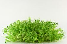 Free Green Plant Royalty Free Stock Images - 8530869
