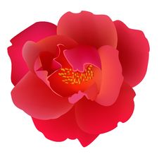 Free Red Rose Stock Photo - 8531080