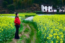 In Rape Field Stock Photography