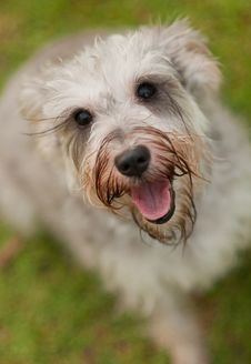 Close Up Of Dog Stock Photography