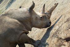 Free Rhinoceros-2 Royalty Free Stock Photo - 8532775