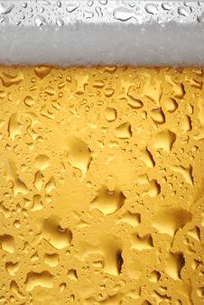 Free Beer Stock Photo - 8533460
