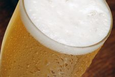 Free Beer Royalty Free Stock Photo - 8533535