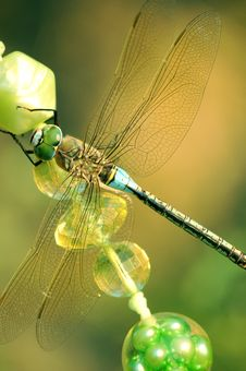 Free Dragonfly Stock Images - 8533544