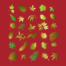 Free Leaf 2 Royalty Free Stock Photo - 8534785