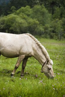 Free Horse Stock Photography - 8535252