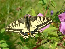 Free Butterfly Stock Image - 8535281