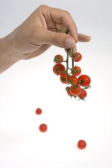 Free Cherry Tomato Royalty Free Stock Photos - 8535558