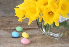 Free Easter Daffodils Stock Images - 8537974