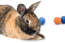 Free A Rabbit With Easter Eggs Royalty Free Stock Photos - 8538048