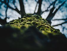 Free Close-up Of Tree Against Sky Royalty Free Stock Images - 85361499