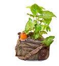 Free Unusual Ornamental Flowerpot Royalty Free Stock Photo - 8547355